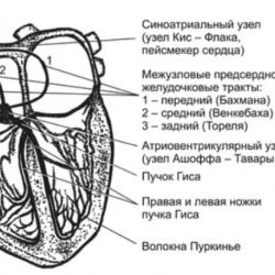 Различия в типах тахикардий: объясняют кардиологи